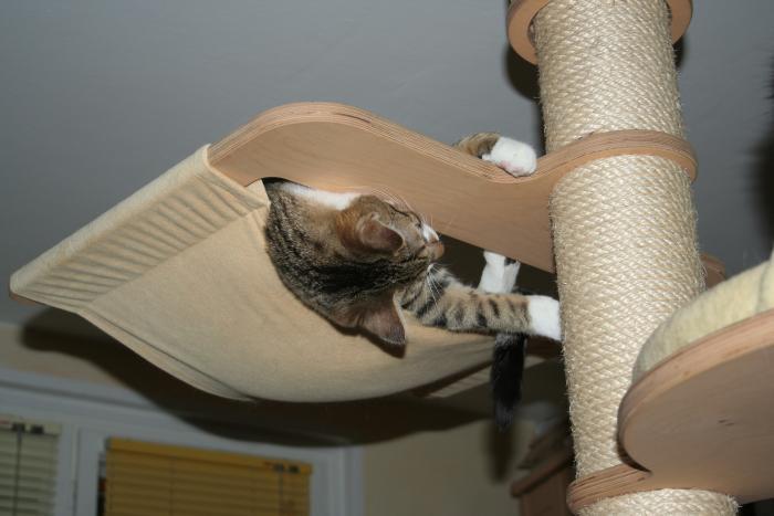 Selfmade Catwalk und Wandhängematte!? - Katzen Forum